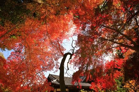 ◆文華殿を囲む庭園の木々も徐々に色を染め始めております。(写真は以前の紅葉の様子)